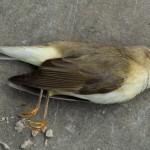 died 01-05-2012